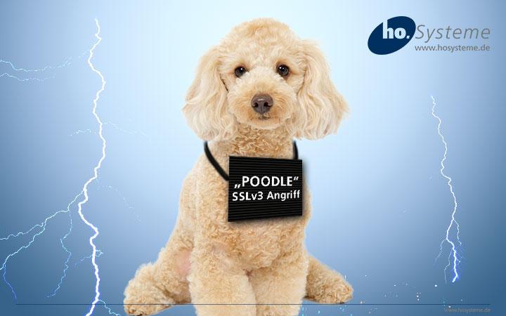 Die Hunde sind los. Poodle macht die SSL Verdindungen unsicher.